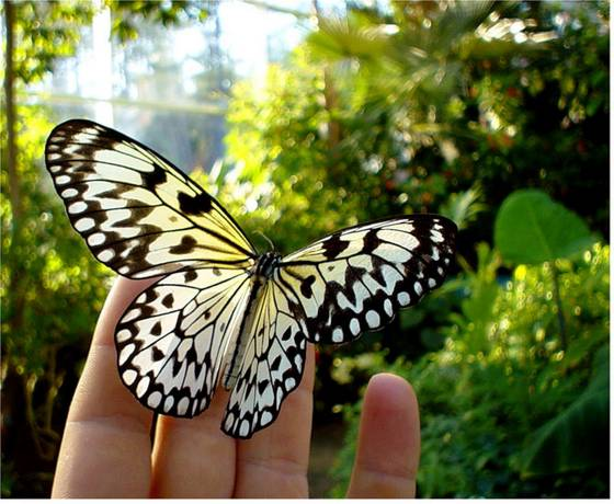 Η πεταλούδα – με την χρωματιστή