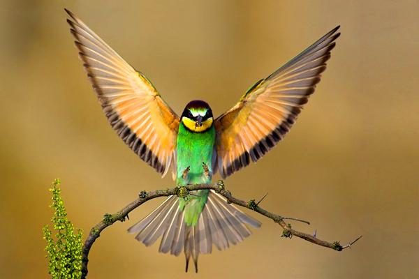 Όμορφες εικόνες... Blog-beautiful-birds-11