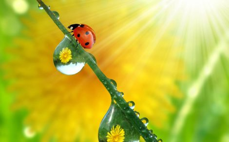 Beautiful ladybug Desktop Wallpapers 1920x1200 (03)